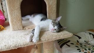 月曜日と火曜日はお休みの保護猫ハウスです。